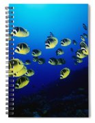 Raccoon Butterflyfish Spiral Notebook