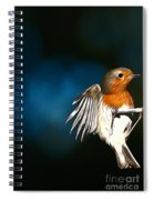Robin Spiral Notebook