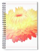 Strawflower Spiral Notebook