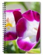 Torenia Named Kauai Magenta Spiral Notebook