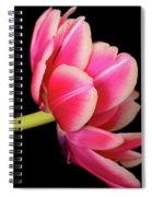 Tulip  Macro Spiral Notebook