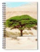 Umbrella Thorn Acacia Acacia Tortilis, Negev Israel Spiral Notebook