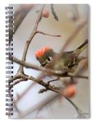 4369 - Ruby-crowned Kinglet Spiral Notebook