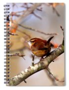 4446 - Carolina Wren Spiral Notebook