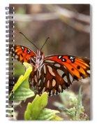 4529 - Butterfly Spiral Notebook