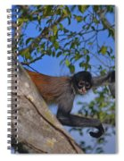 48- Capuchin Monkey Spiral Notebook