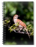4979 - Brown Thrasher Spiral Notebook