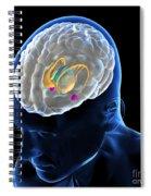 Anatomy Of The Brain Spiral Notebook