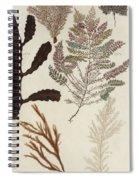 Aquatic Animals - Seafood - Algae - Seaplants - Coral Spiral Notebook