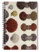 Aquatic Animals - Seafood - Shells - Mussels Spiral Notebook