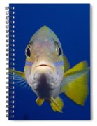 Bluestripe Snapper Spiral Notebook