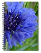 Centaurea Cyanus 2 Spiral Notebook