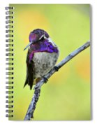 Costas Hummingbird  Spiral Notebook