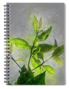 Fresh Growth Of Healthy Green Leafs  Spiral Notebook
