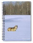 Gray Wolf Spiral Notebook
