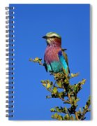 Lilac Breasted Roller Spiral Notebook