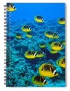 Raccoon Butterflyfish Spiral Notebook