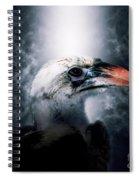 Red-billed Hornbill ,samburu, Kenya Spiral Notebook