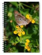 5 Yellow Flowers And A Buttefly Spiral Notebook