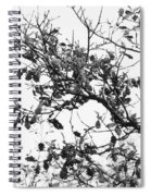 Nature Spiral Notebook