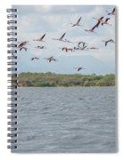 Colombia Sanctuary Of Flamingos Near Riohacha Spiral Notebook