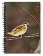 Eurasian Tree Sparrow Spiral Notebook
