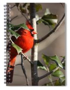 Img_0001 - Northern Cardinal Spiral Notebook