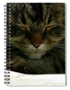 Maine Coon Cat Spiral Notebook