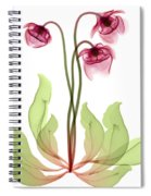 Pitcher Plant Flowers, X-ray Spiral Notebook