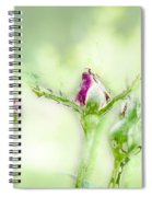 Red Rose Bud Spiral Notebook