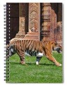 61- Sumatran Tiger Spiral Notebook