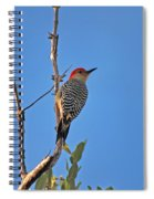 62- Red-bellied Woodpecker  Spiral Notebook