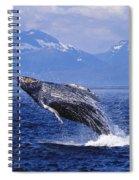 Humpback Whale Breaching Spiral Notebook