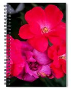 Knockout Roses Painted  Spiral Notebook