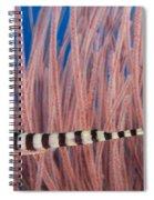 Malaysia, Marine Life Spiral Notebook