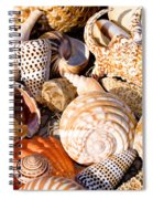 Mix Group Of Seashells Spiral Notebook
