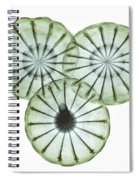 Opium Poppy Pods, X-ray Spiral Notebook
