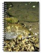 Rock Bass Spiral Notebook