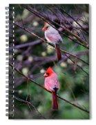 7440-008 Cardinal Spiral Notebook