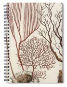 Aquatic Animals - Seafood - Algae - Seaplants - Coral Spiral Notebook