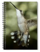 Female Ruby-throated Hummingbird Spiral Notebook