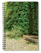 Fern Canyon Spiral Notebook