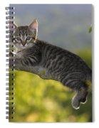 Kitten In A Tree Spiral Notebook