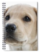 Labrador Puppy Spiral Notebook