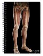 Leg Musculature Spiral Notebook