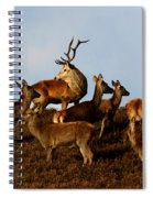 Red Deer In The Highlands Spiral Notebook