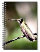 8181-001 - Ruby-throated Hummingbird Spiral Notebook