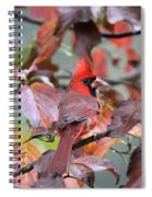 8623-001 - Northern Cardinal Spiral Notebook