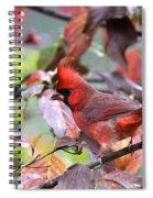 8627-002 - Northern Cardinal Spiral Notebook