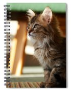 Cat Spiral Notebook